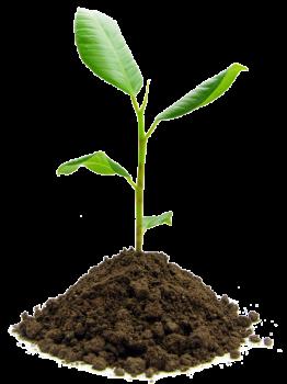 Plant-1